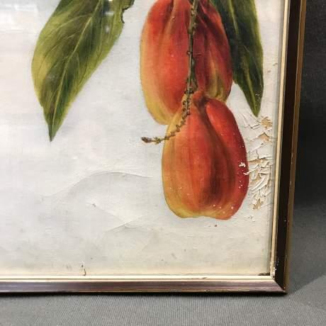 1920s Botanical Portrait Blighti Sapida Trinidad image-3