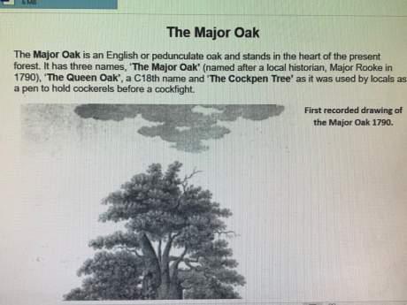 Antique English  Bellows - Major Oak - Sherwood Forest image-6