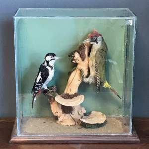 Victorian Taxidermy Study of Two Woodpeckers