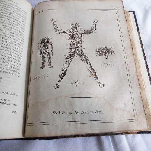 Culpepers English Physician and Complete Herbal 1790s Edition image-6