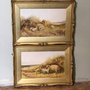 Pair of Watercolours of Sheep by TS Cooper