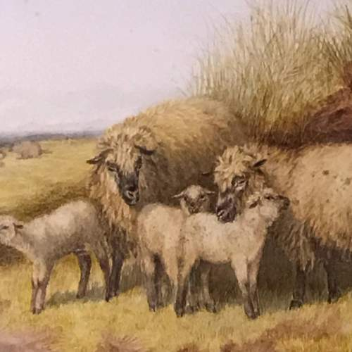 Pair of Watercolours of Sheep by TS Cooper image-2