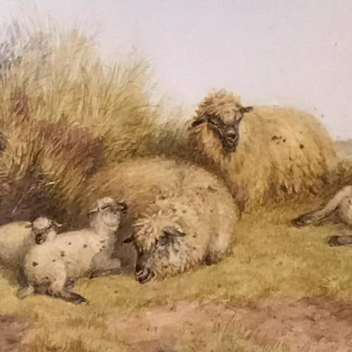 Pair of Watercolours of Sheep by TS Cooper image-3