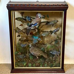 Impressive Large Victorian Taxidermy Birds in Glass Case