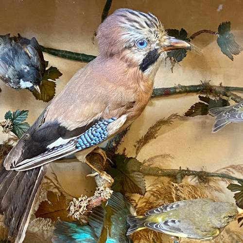 Impressive Large Victorian Taxidermy Birds in Glass Case image-2