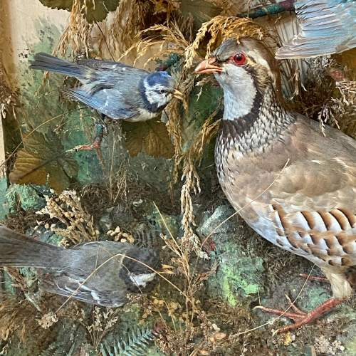 Impressive Large Victorian Taxidermy Birds in Glass Case image-3