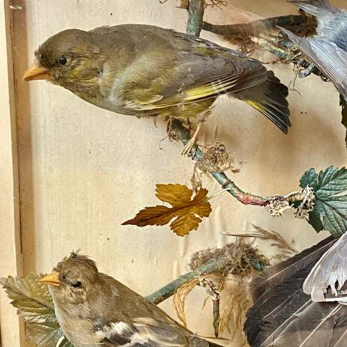 Impressive Large Victorian Taxidermy Birds in Glass Case image-4