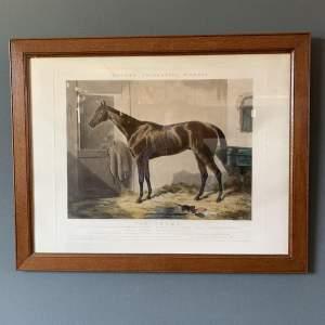Van Trump Fine Print of Race Horse
