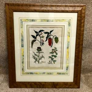 Georgian Framed And Glazed Botanical Print