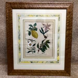 Antique Framed And Glazed Botanical Print