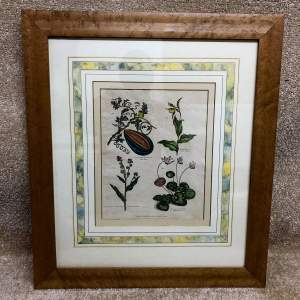 Early 19th Century Framed And Glazed Botanical Print