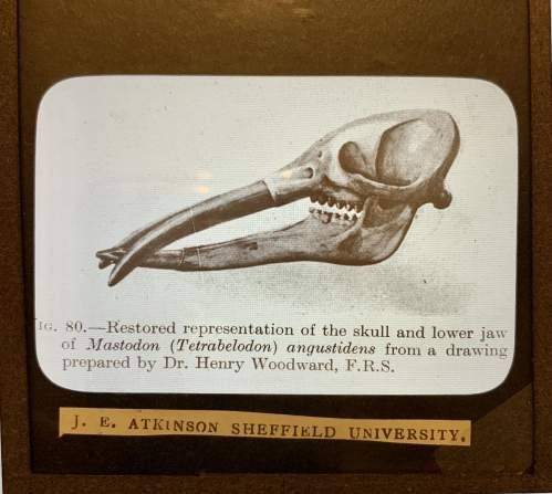 Magnificent Collection Of Glass Slides Of The Natural Sciences image-3