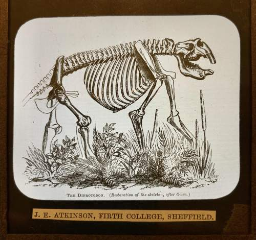 Magnificent Collection Of Glass Slides Of The Natural Sciences image-4