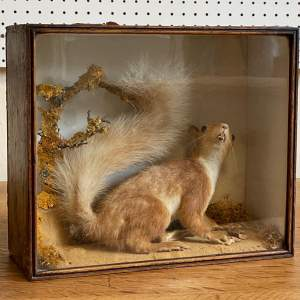 Cased Taxidermy Red Squirrel
