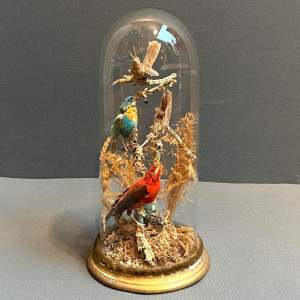 Victorian Domed Taxidermy of South American Birds
