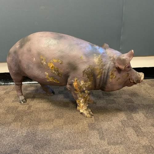 Large Vintage Model Pig image-4