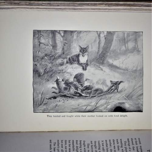 Book of Wild Animals I Have Known image-5