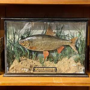 Victorian Taxidermy Roach Fish dated 1890