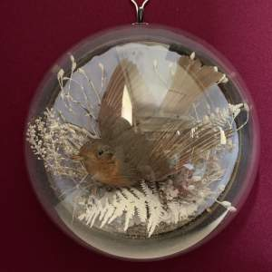 Winter Robin Taxidermy Wall Dome
