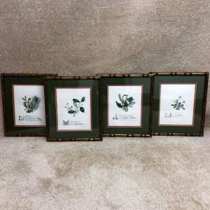 Set of Four 19th Century Botanic Prints