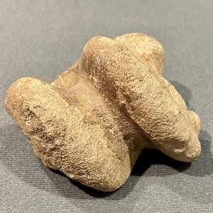 Bison Foot Bone Fossil