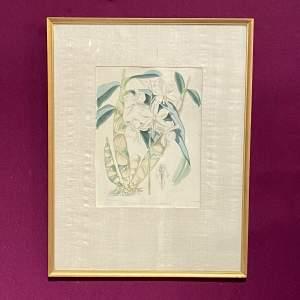 19th Century Botanical Lithograph Epidendrum Bicornutum Print