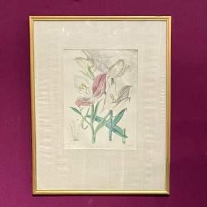 19th Century Botanical Lithograph Disa Grandiflora Print