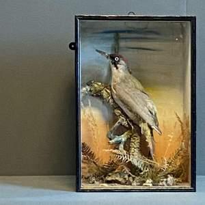 Cased Taxidermy Bird
