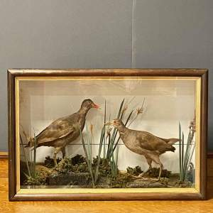 Late Victorian Pair of Taxidermy Moorhen Waterfowls