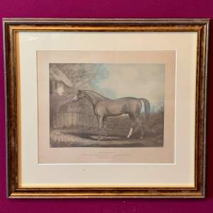 Early 20th Century Eclipse Racehorse Coloured Copperplate Print
