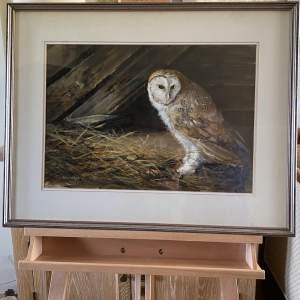 Original Painting - Barn Owl by John Stephens