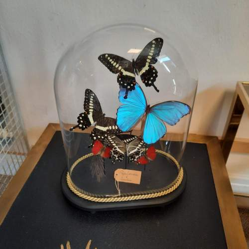 Globe with Taxidermy Papilionidae and Morphini Butterflies image-3