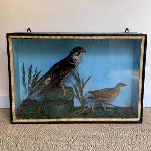 Cased Taxidermy Sparrowhawk and Sandpiper