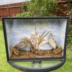 Taxidermy Woodcocks In a  Naturalist Setting within a Wooden Case
