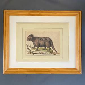 The Porcupine from Hudsons Bay Etching by George Edwards