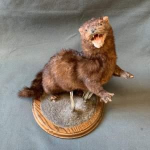 Vintage Taxidermy Creature